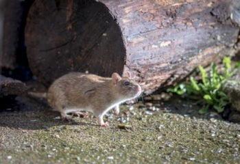 mice go on their own